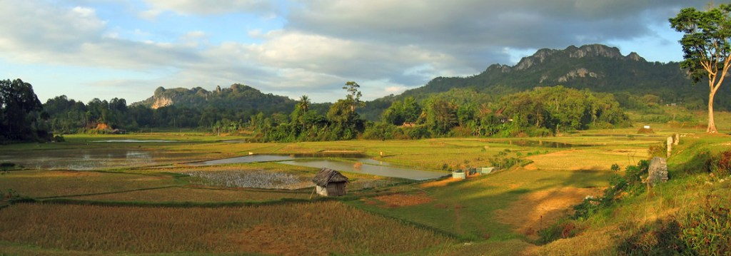 View over the ricefields towards Batutumonga