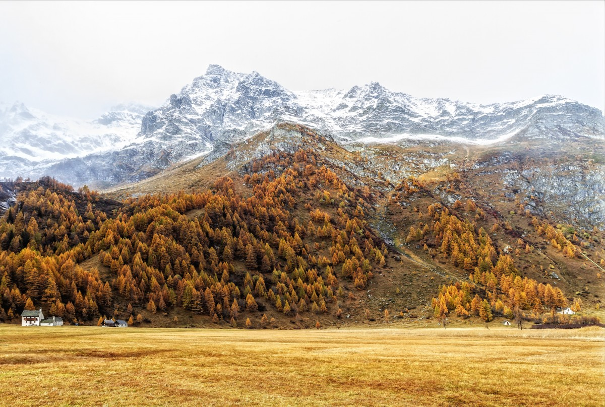 snowy landscape with fall colors