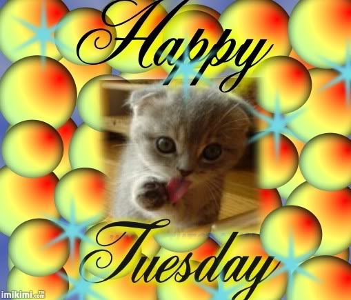 tuesday-kitten