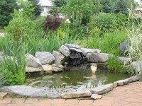The patio pond