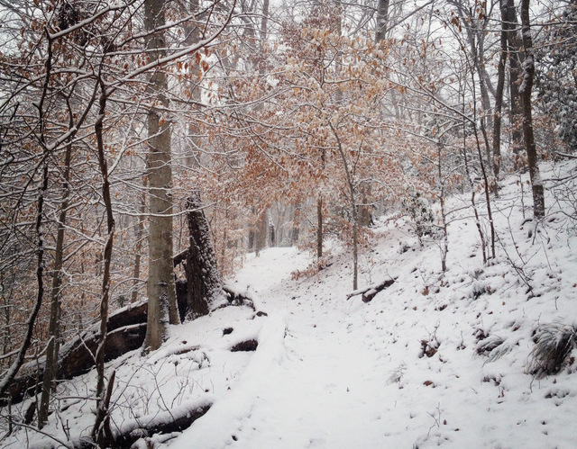 Rock_Creek_Park_Snow