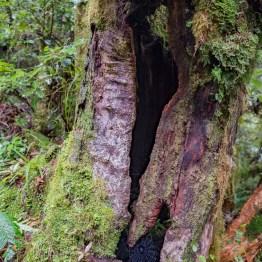 Goblin forest, Stratford