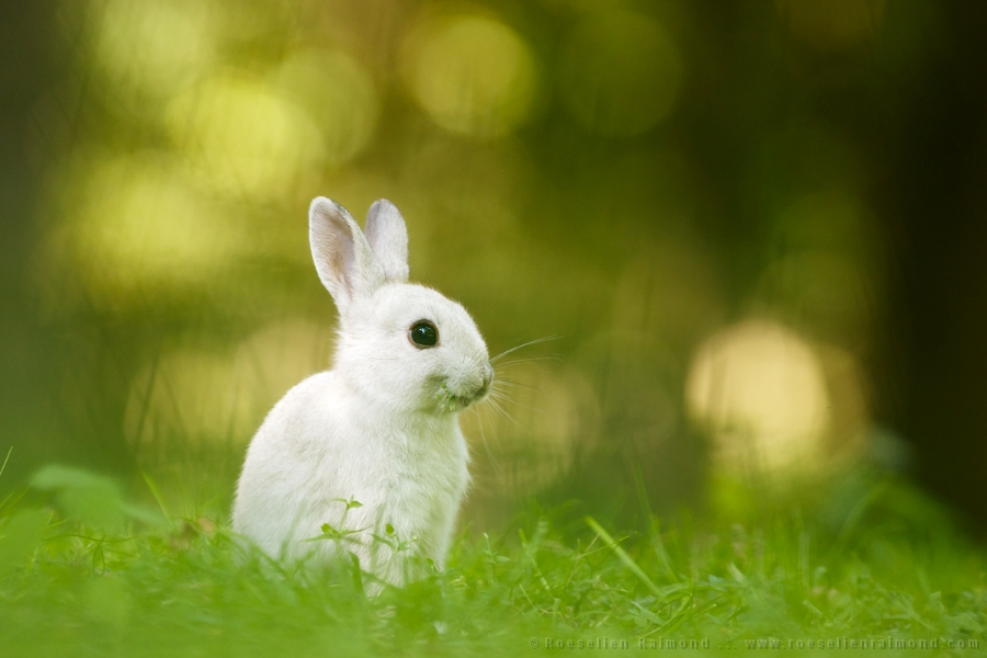 Cute White Baby Rabbits Wallpapers The Smiling Rabbit Roeselien Raimond Nature Photography