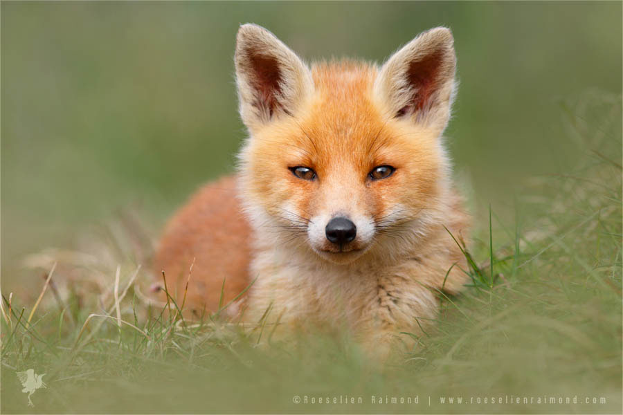 Cute Smiling Babies Wallpapers Gallery Roeselien Raimond Nature Photography