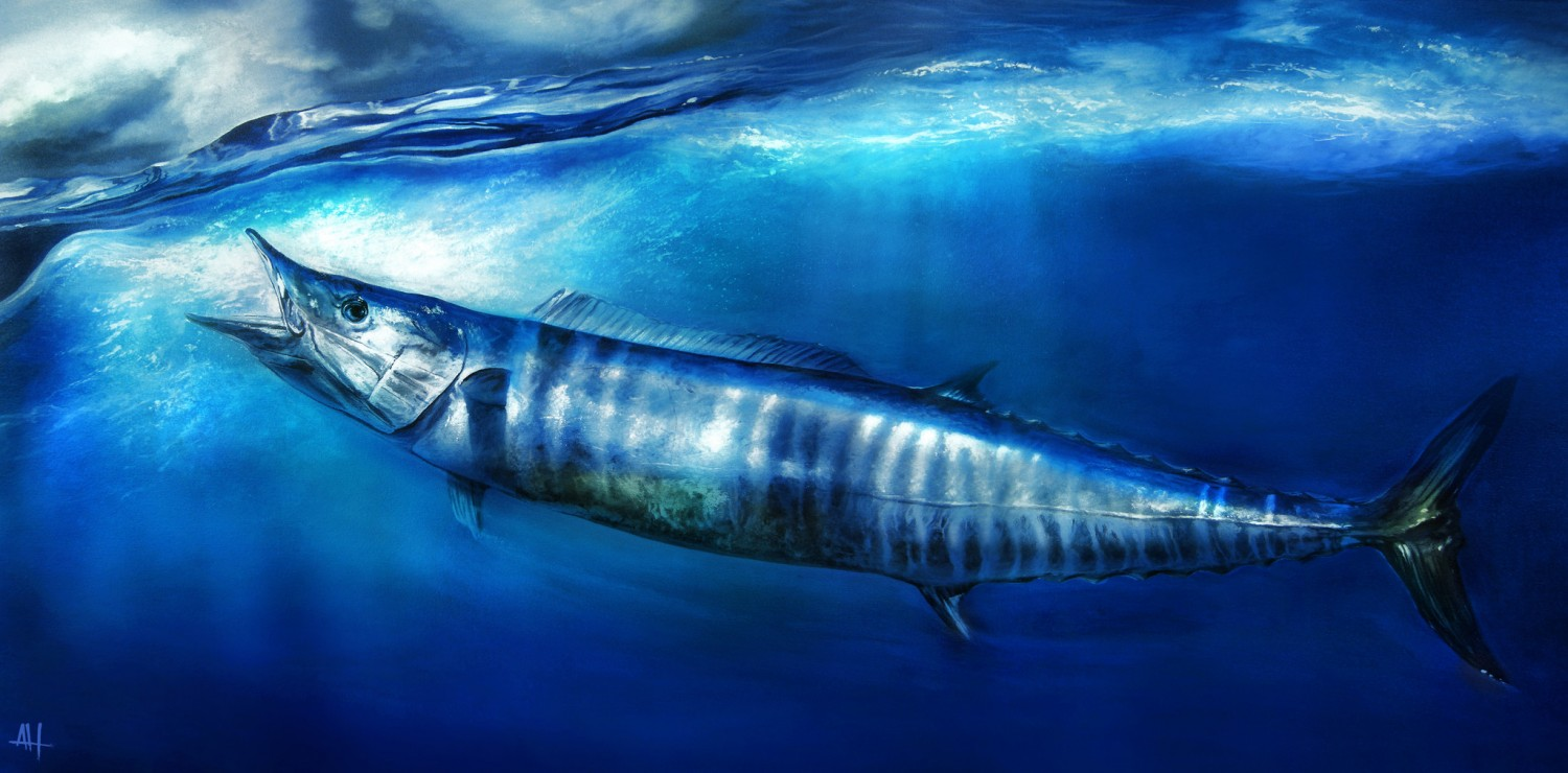 New Year 2014 Hd Wallpapers Roffs Fish Of The Week Wahoo Roffer S Ocean Fishing