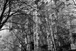 NYC300