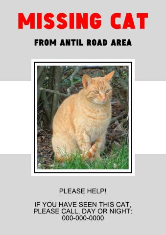 Missing Cat poster template, How to create a Missing Cat poster