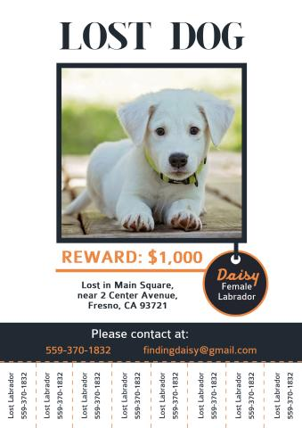 missing posters template - Onwebioinnovate - Lost Dog Flyer Examples