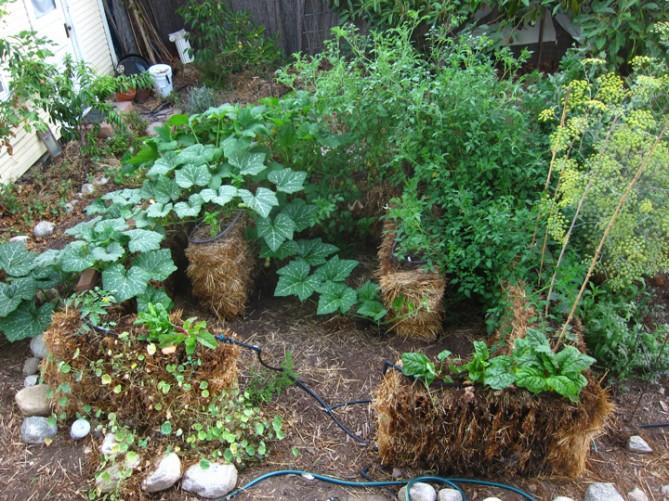 Straw Bale Garden Update: Success!   Root Simple