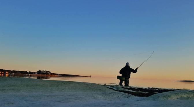 Sjøørret fiskere tenker vi litt feil?