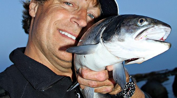 Ukens Sjøørret fisker – Asgeir Alvestad