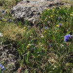 Flora and Fauna of Mount Evans