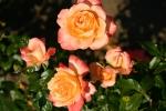 22nd February 1943 Beheading Of The White Rose Dorian