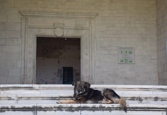 Dog on the convent steps