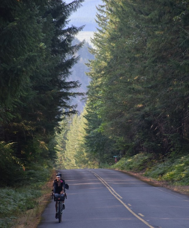 Quiet roads, tranquil forests