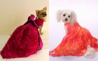 The 10 most awesomely extravagant dog products - Rover Blog