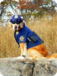 Who Wore It Better: Dog Costume Edition | Rover.com