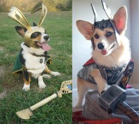 9 Dogs Who Totally Nailed Halloween
