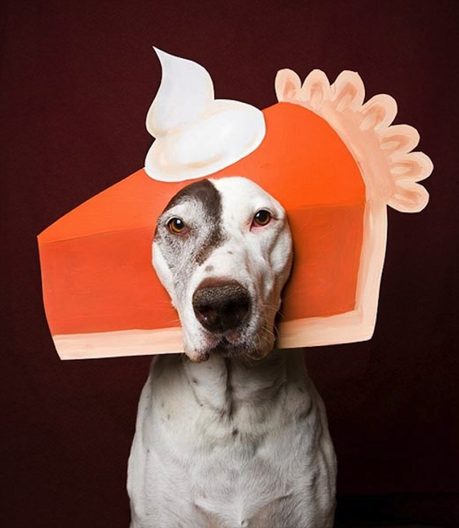 Pitbulls Fall Wallpaper 9 Dogs That Look Like Thanksgiving Dinner The Dog People