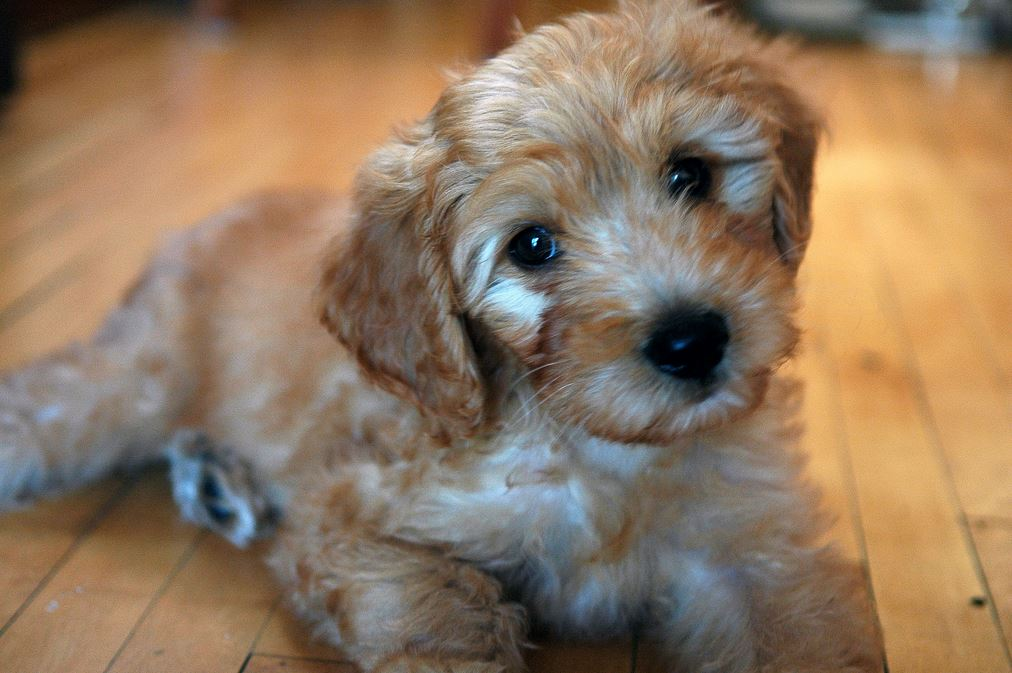 Is A Mixed Breed Dog The Perfect Pet For You The Dog
