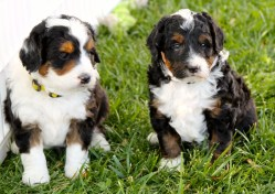 Small Of Dog Breed Identification Quiz