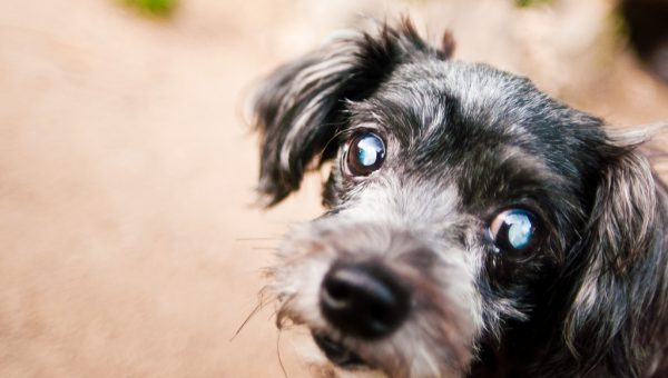 Are Dogs Color Blind? All Your Questions about Dog Eyesight