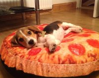 pizza dog bed pizza dog bed 28 images dogzzzz round pizza ...