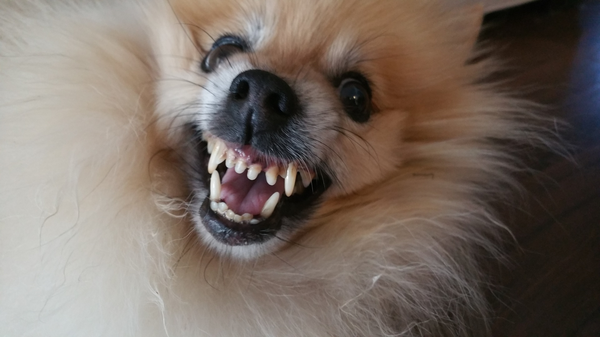 Small Cute Boy Wallpaper My Dog Bit Me What Do I Do Now The Dog People By Rover Com