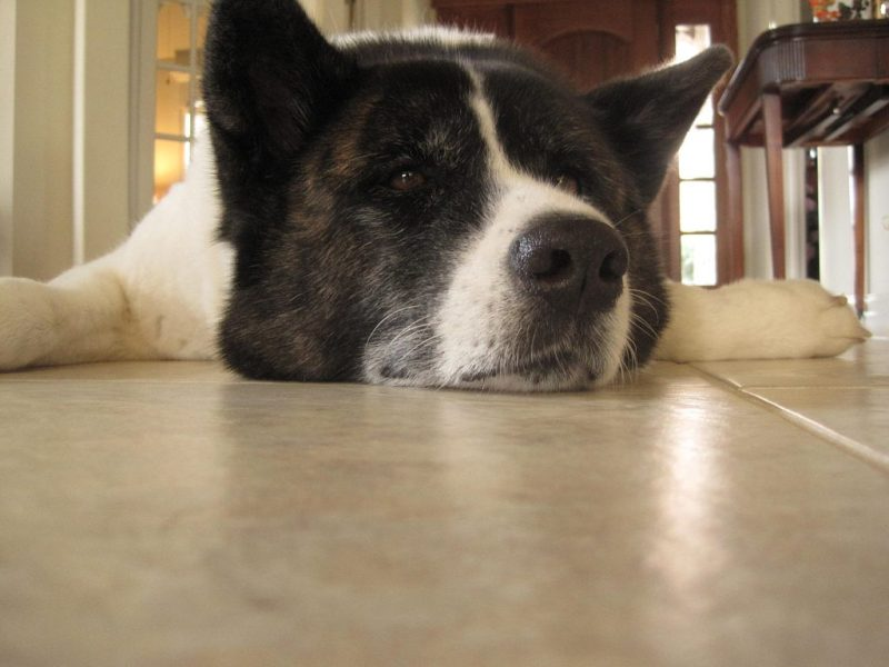 Large Of Calmest Dog Breeds