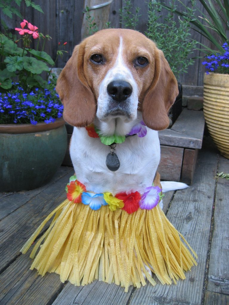 Compelling Beagle Most Loyal Dog Breeds Might Surprise Dog Most Loyal Dogs Uk 10 Most Loyal Dogs bark post Most Loyal Dogs