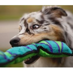 Small Crop Of Why Do Dogs Like Squeaky Toys