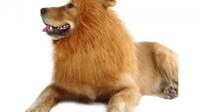 Large Dog Costumes