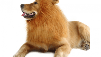 Large Dog Costumes | Top Large Dog Halloween Costume Ideas