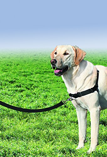 A Professional Trainer\u0027s Guide to the Right Dog Harness The Dog