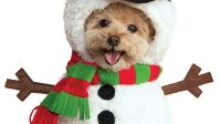 11 Best Christmas Dog Outfits to Get Your Dog in the ...