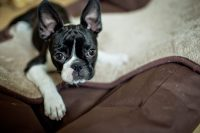 Why Do Dogs Dig? | Why Dogs Dig at Blankets, Carpet and in ...