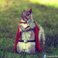Thor Squirrel by Shikharsrivastava