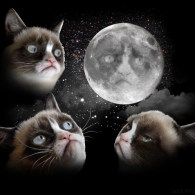 Three Grumpy Cat Moon