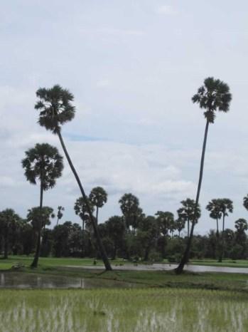 Kampot065