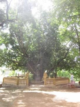 Kampot131