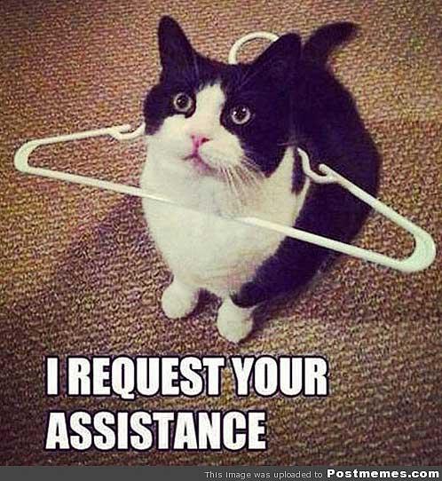 cat-needs-help