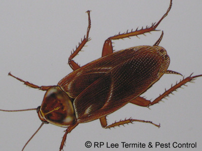 RP Lee Termite  Pest Control - The Bryan-College Station Pest