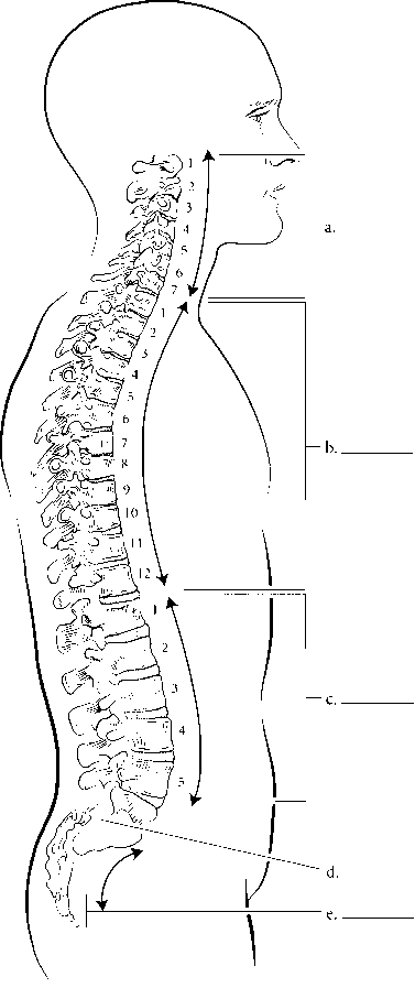labeled spinal cord diagram