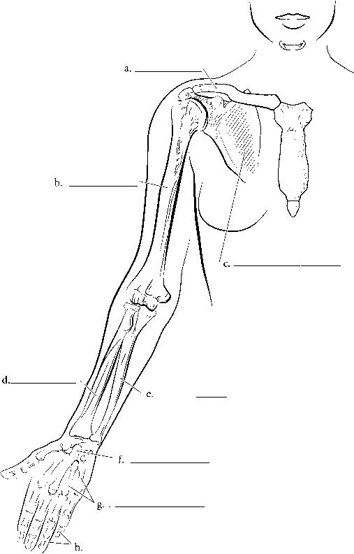 venous diagram
