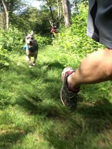 Happy National Dog Day! Trail run in Colt State Park