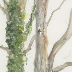 Watercolour painting. JBA014 Ivy Trunk. Artist: Judy Barends