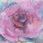Watercolour painting. RWB0190 Full Bloom. Artist: Vandy Massey