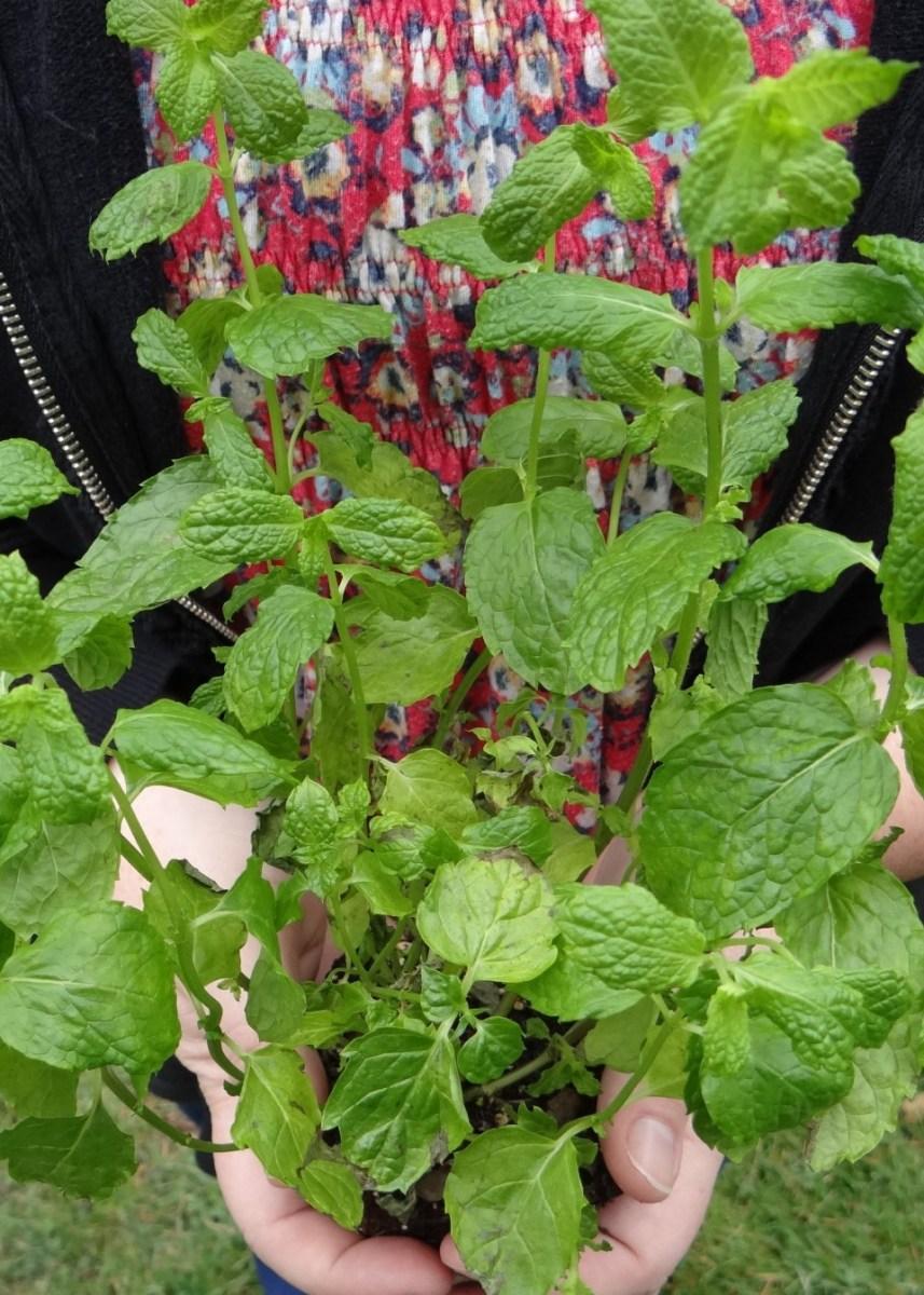 The Secret to Surviving Garden Season Allergies