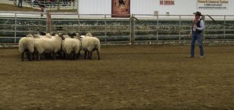 ALP: Tips for Effective Stockmanship with Curt Pate