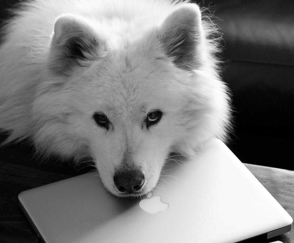 Imposing Spanish Dog Names Reddit Dogs Dog Names Macbook Computer Russian Dog To Samoyed Dog bark post White Dog Names